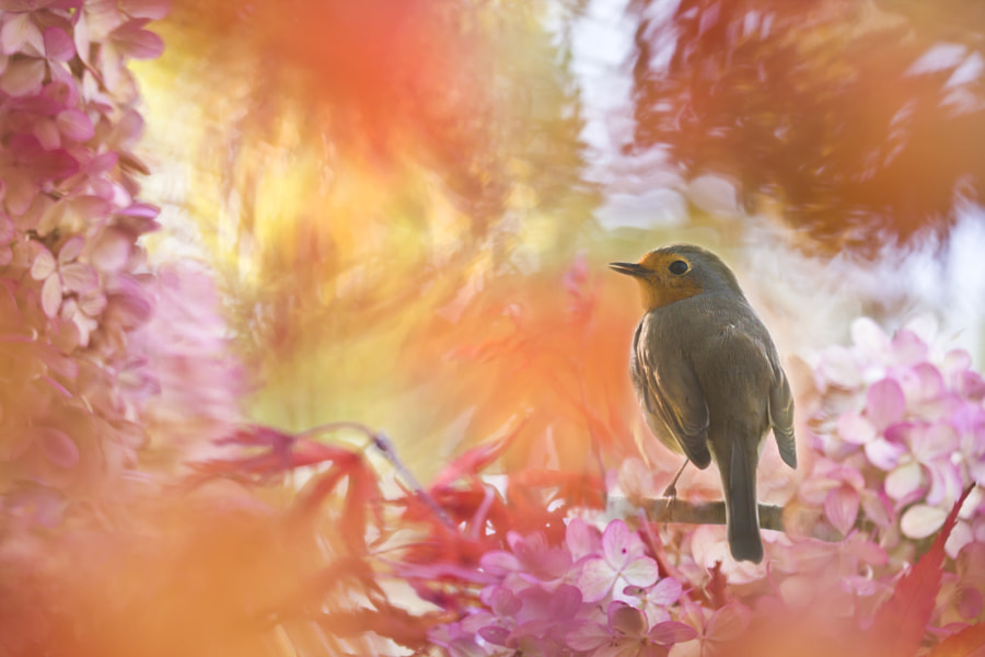 Indian summer with Robin by Teuni Stevense on 500px.com