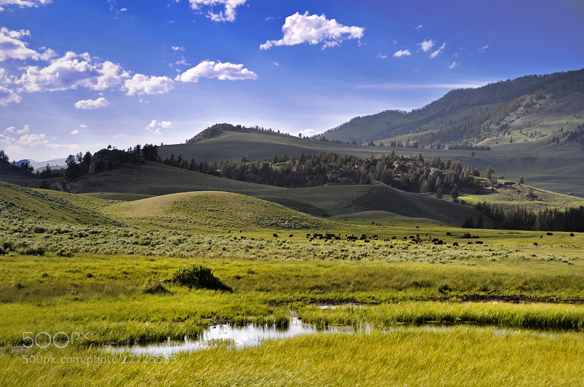 Photograph The plains of Yellowstone by Alon Nachum on 500px