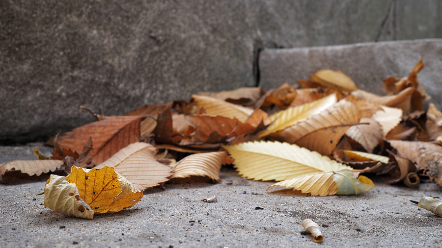Leaf Composition (Dry) by Nancy Lundebjerg on 500px.com