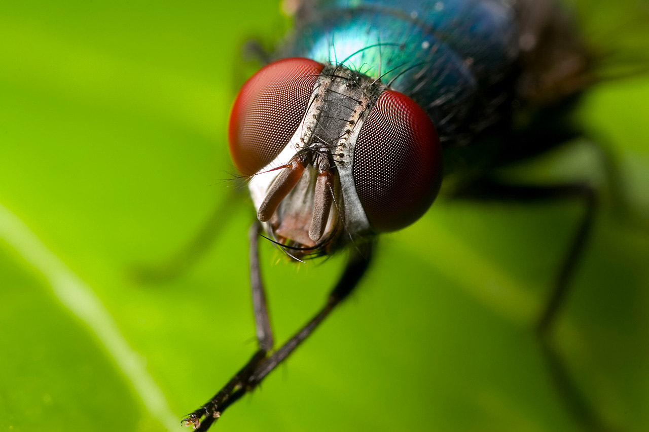 Photograph Colorful Fly by Kayman Studio on 500px