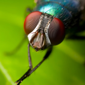 Colorful Fly by Kayman Studio (Kayman_Studio)) on 500px.com