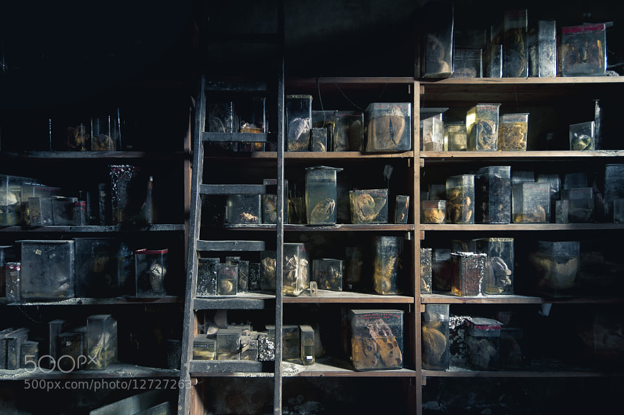 Photograph Specimen Shelves by James Charlick on 500px