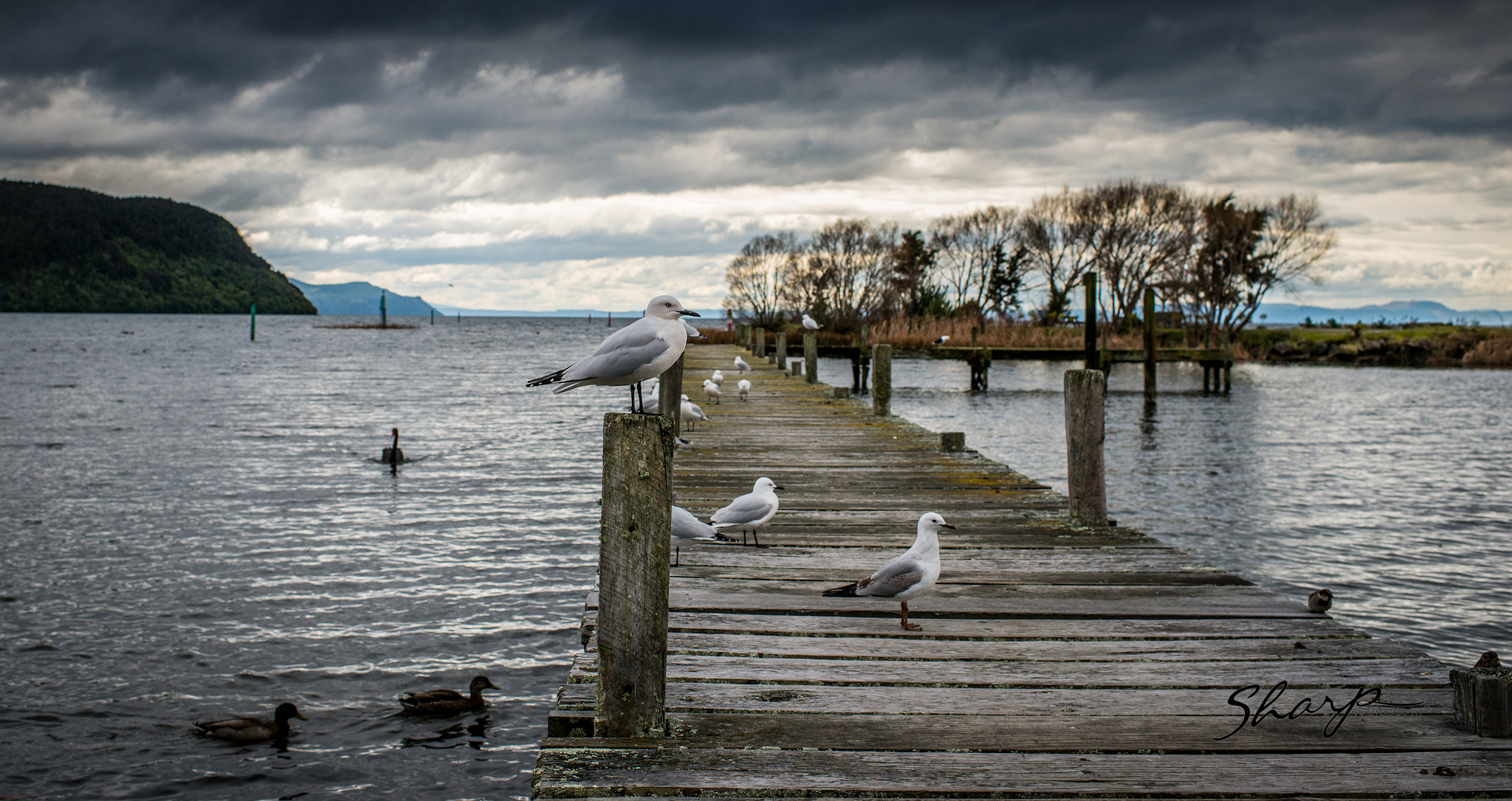 Photograph Lake Taupo by darren sharp on 500px