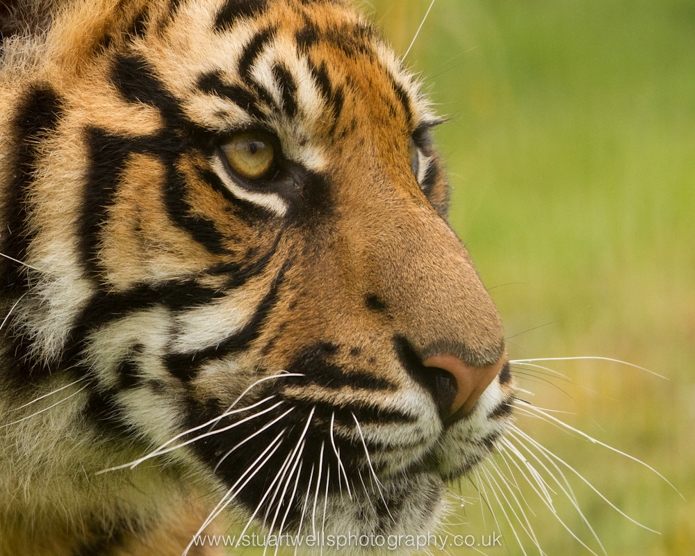 Photograph Look's do kill by Stuart Wells on 500px