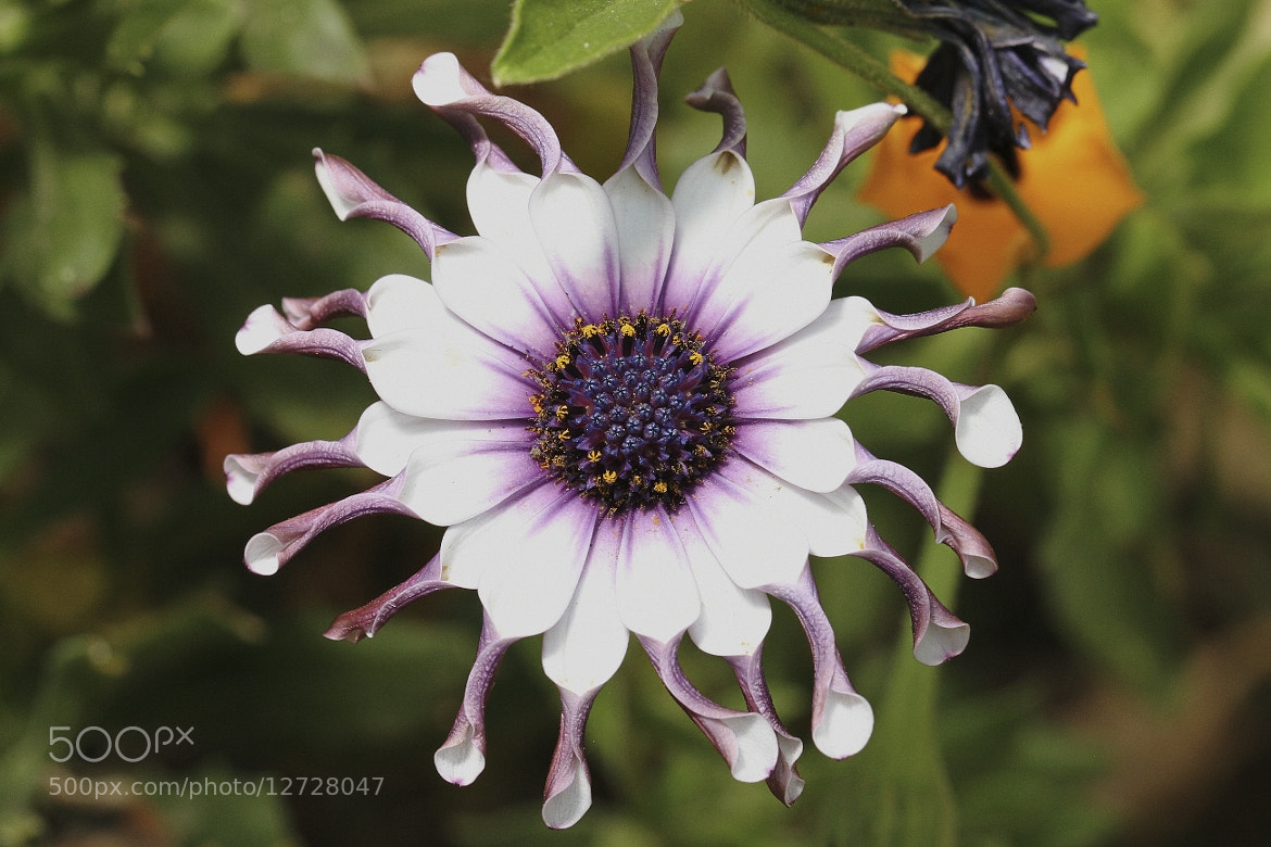 Photograph Flower #2 by Henk Botha on 500px