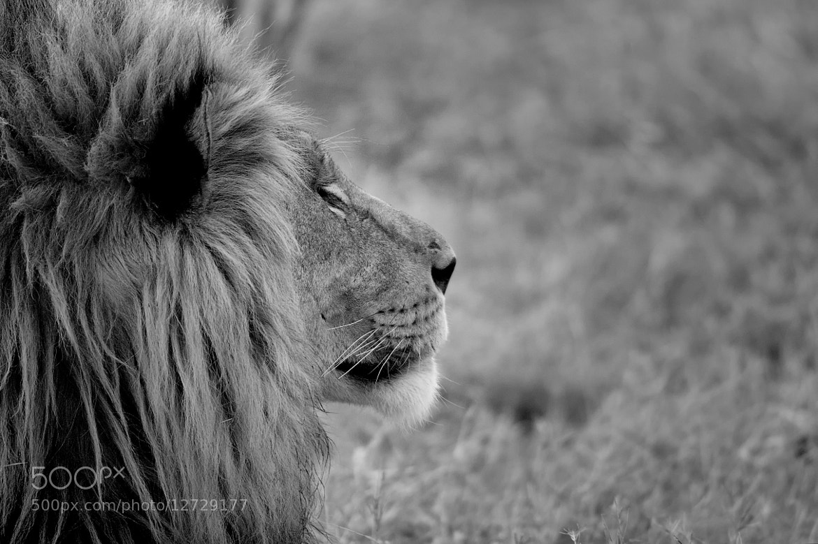 Photograph The King by Nicole Cambré on 500px