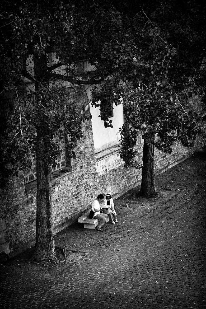 Photograph Under the trees by Timothée Taupin on 500px