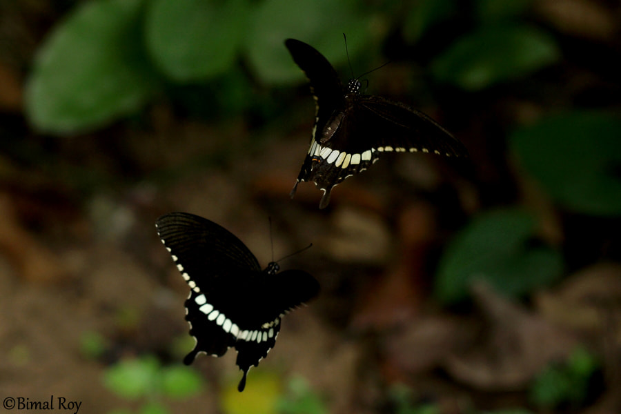 Photograph ♥ In Love ♥ by Bimal Roy on 500px