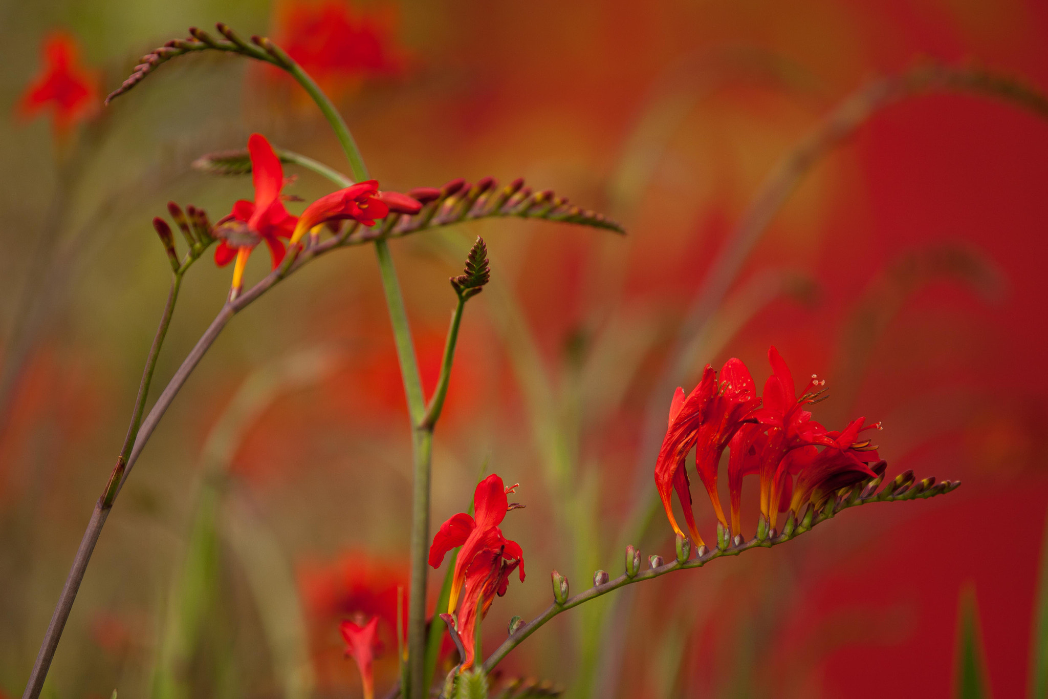 Photograph Red by Lake Crimson on 500px