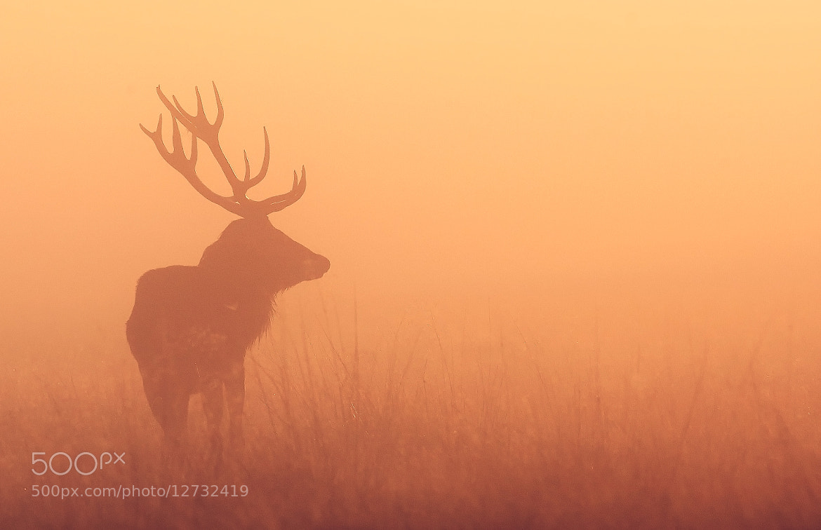 Photograph orange by Mark Bridger on 500px