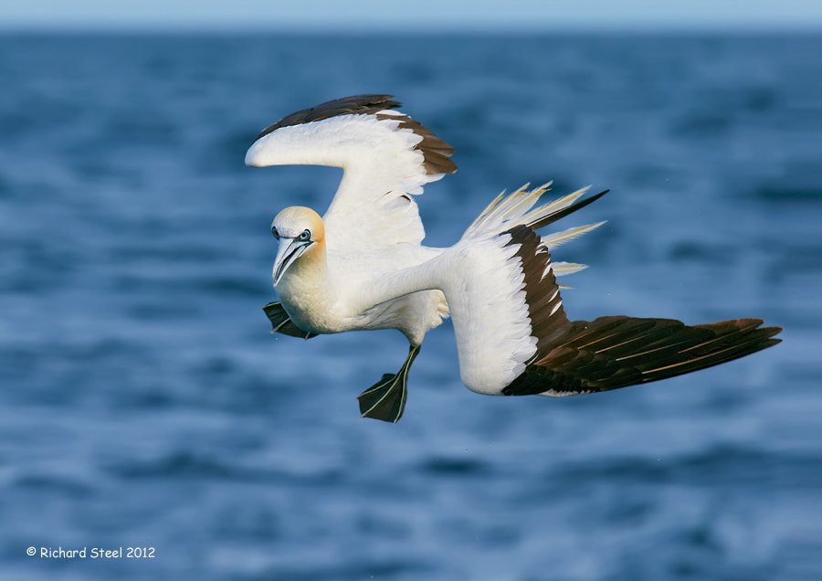 Photograph Prepare to Dive by Richard Steel on 500px