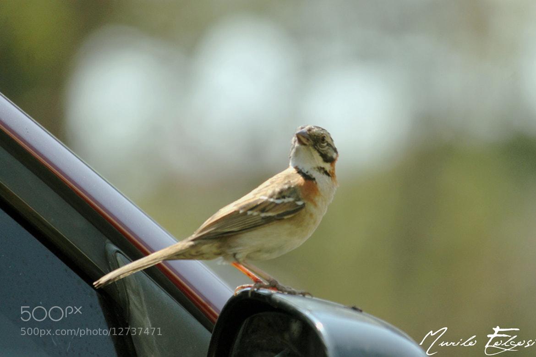 Photograph bird by Murilo Folgosi on 500px