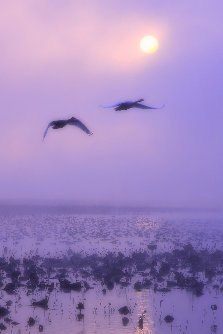 Photograph Departure in the foggy morning  by yume . on 500px