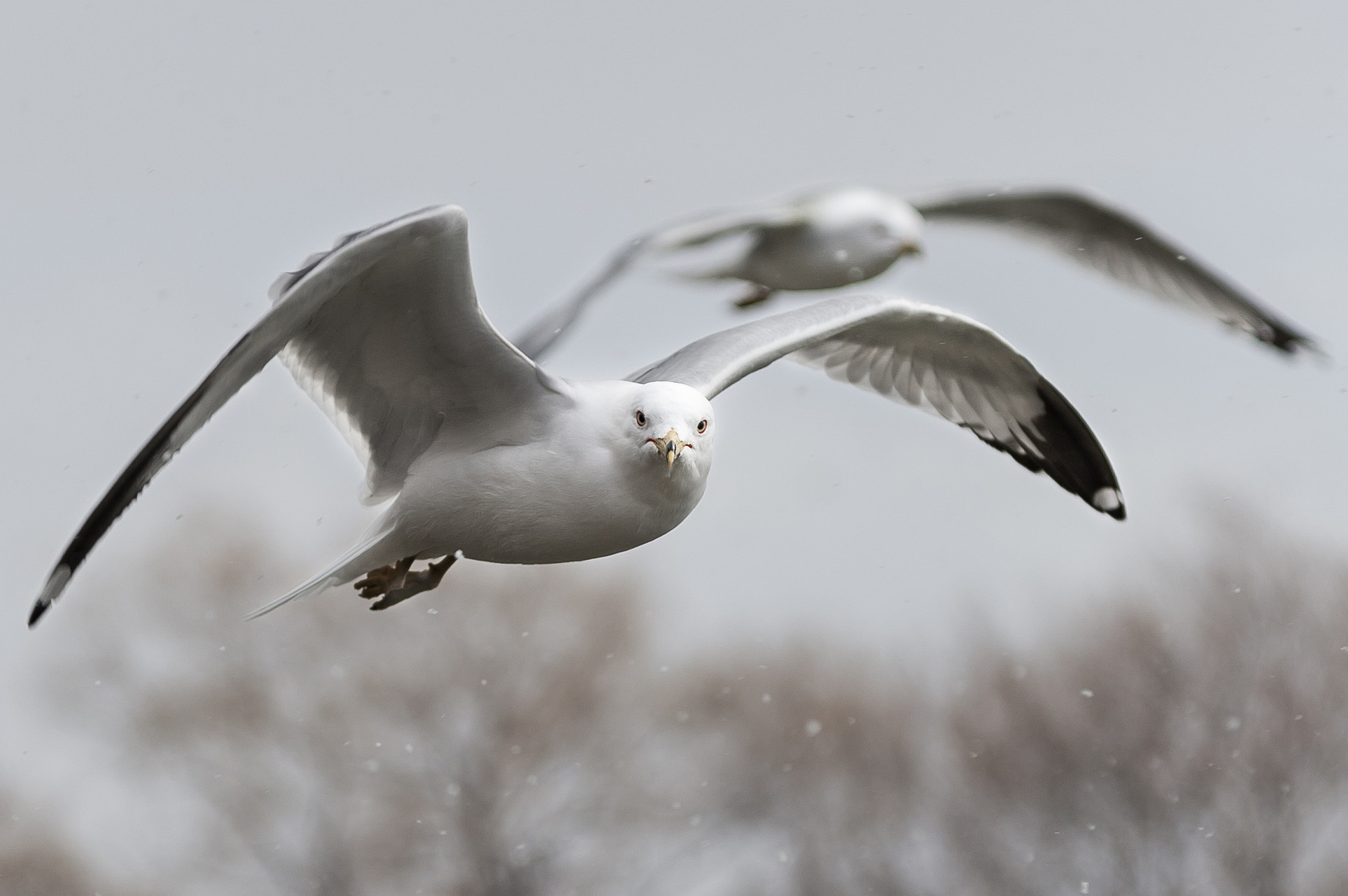 Photograph In Flight by Justin Lo on 500px
