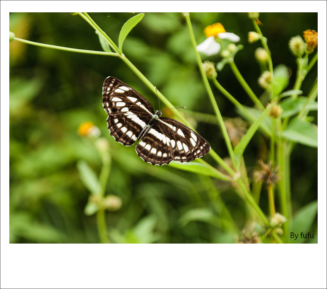 Photograph butterfly by 軒銘 劉 on 500px