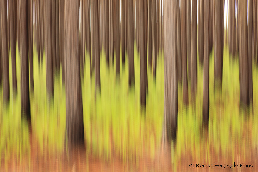 Photograph Brush strokes by Renzo  Seravalle on 500px