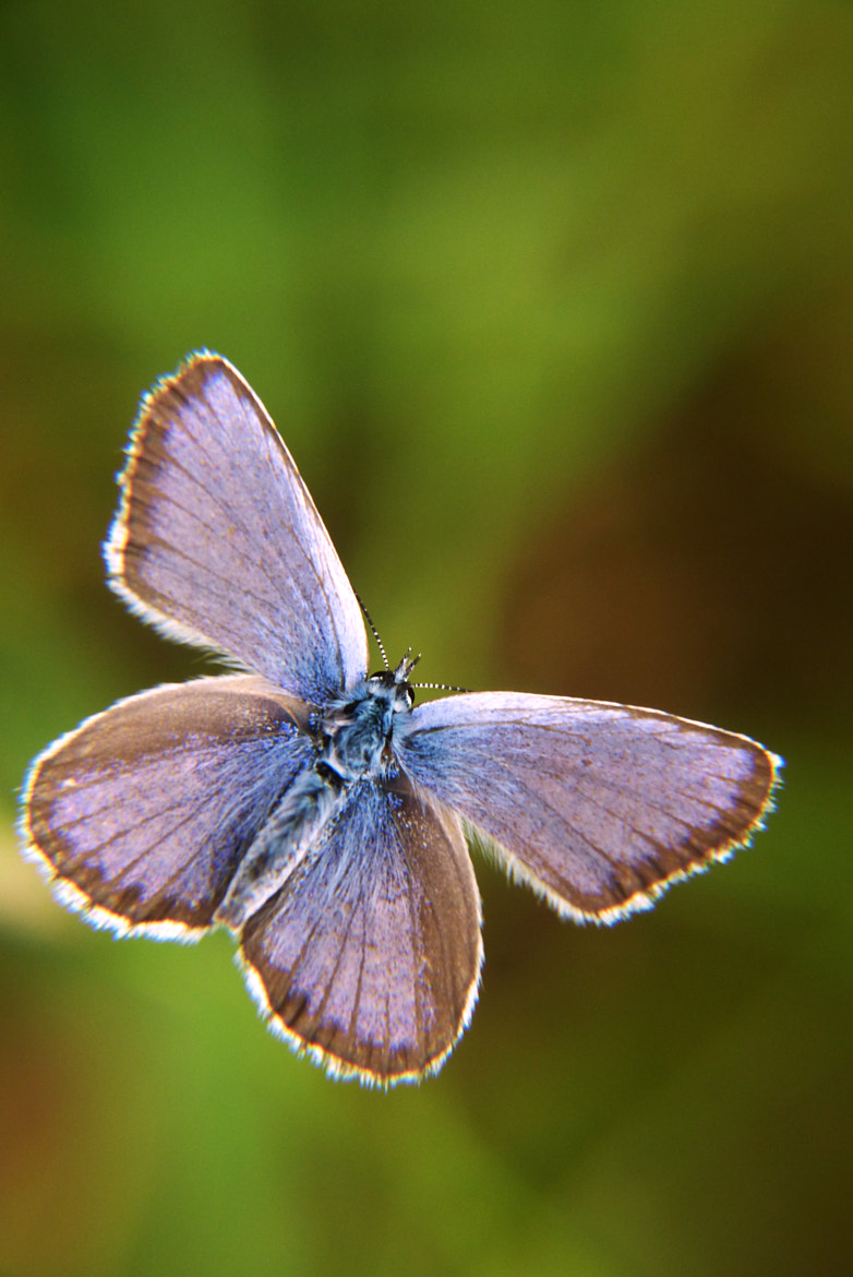 Photograph butterfly by © Rasa OM on 500px