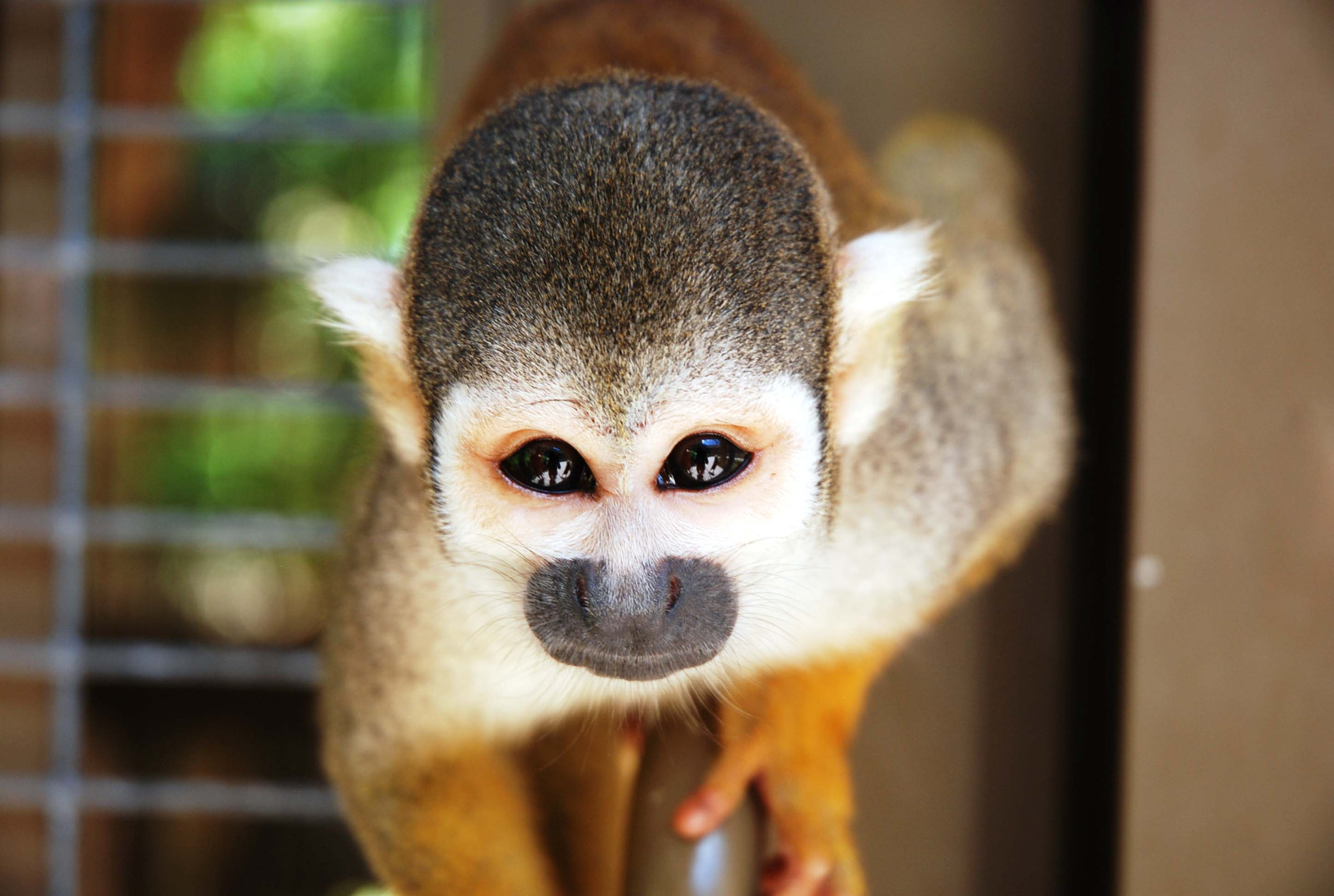 Photograph The monkey by Patricia Vandal on 500px