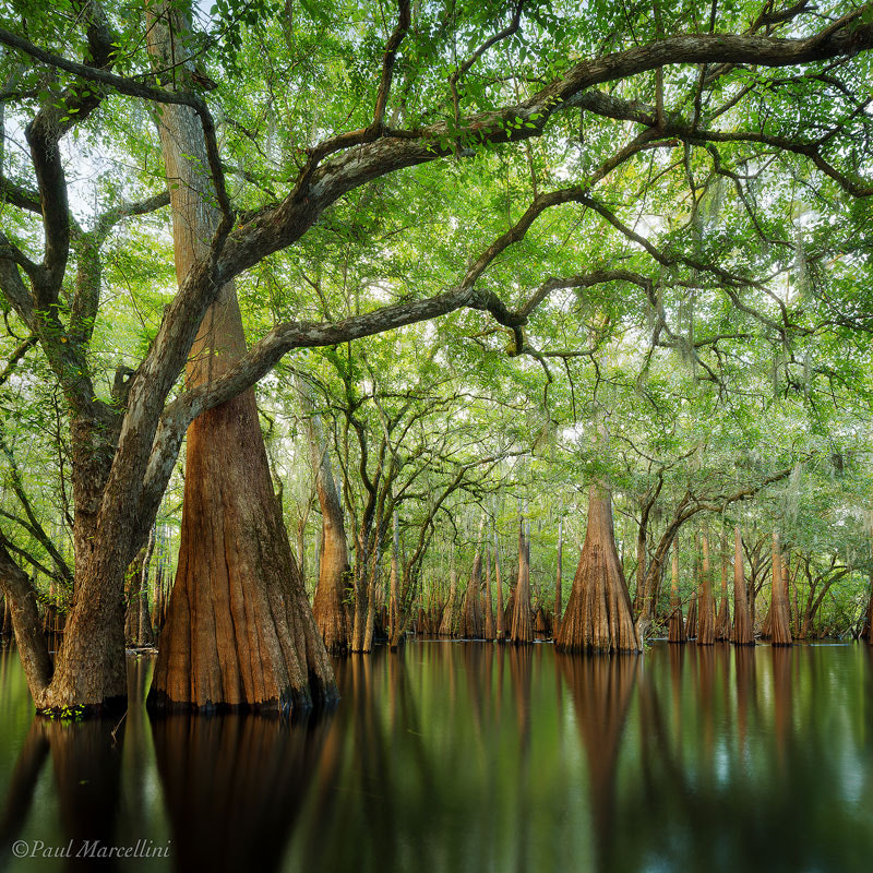 Photograph Cypress Sanctuary by Paul Marcellini on 500px