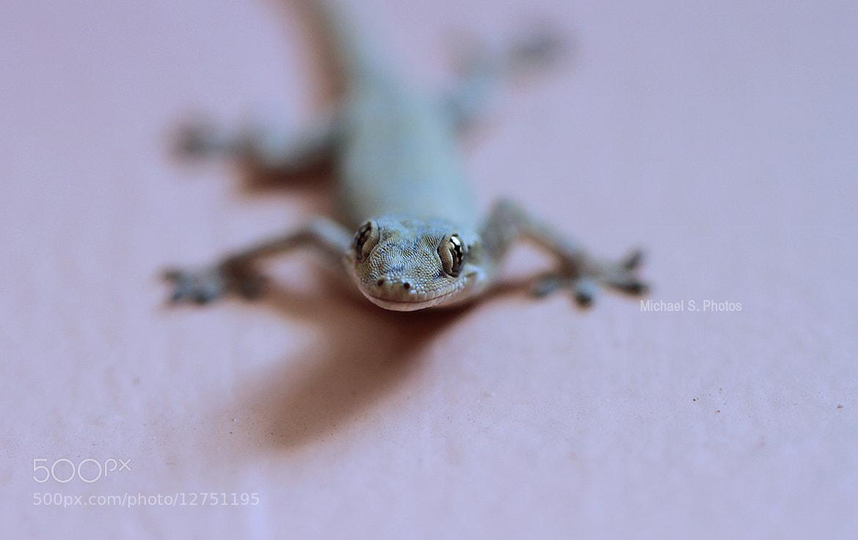 Photograph Lizard by Michael Savellano on 500px