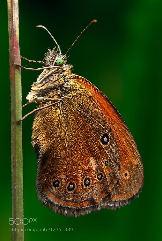 Photograph butterfly by Dragan Đurić on 500px