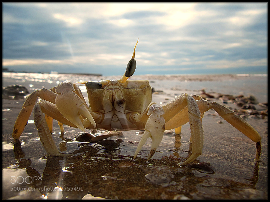 Photograph Mr. Crab by Hussam Haji Bakr on 500px