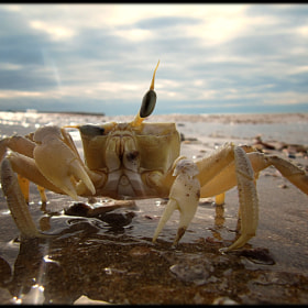 Mr. Crab by Hussam Haji Bakr (hussamhajibakr)) on 500px.com