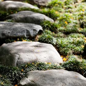 From the Japanese Friendship Garden in Balboa Park, San Diego, CA.