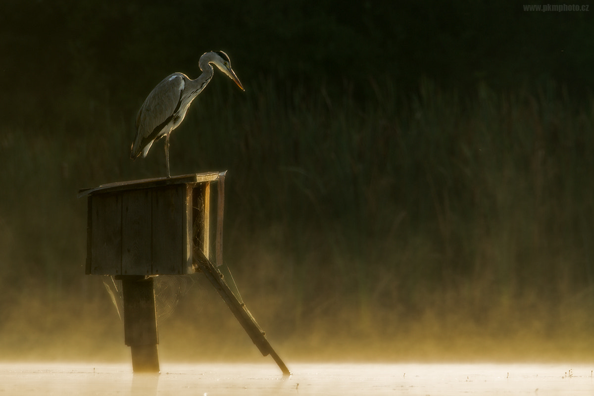 Photograph Early morning's mood by Peter Krejzl on 500px