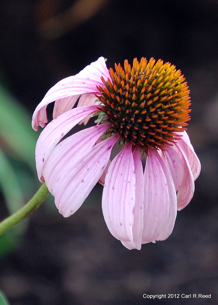 Photograph flower 1660 by Carl Reed on 500px