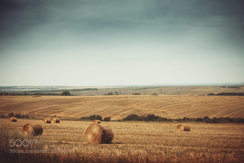 Photograph field by Ilya Mihailov on 500px