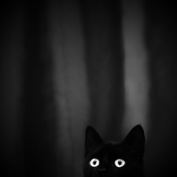 Dark by Veronika Klimonova on 500px.com