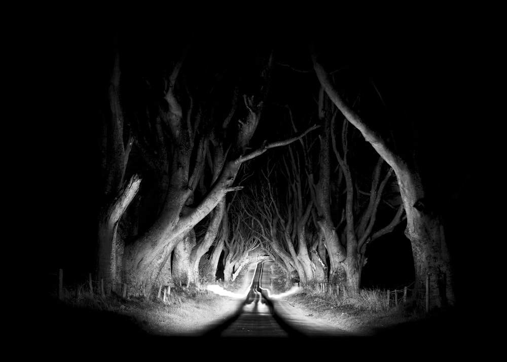 Photograph Stranocum Trees - The Dark Hedges - Beragh road - Co.Antrim v2 by Stephen Lyons on 500px