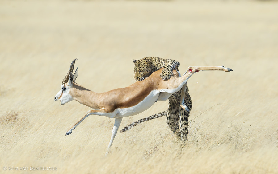 Final Leap by Wim van den Heever on 500px.com