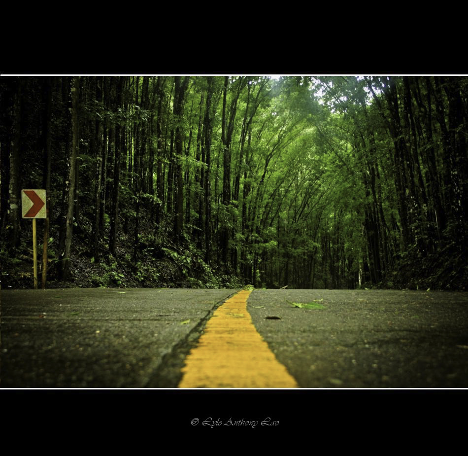 Photograph Man-made Forest Bohol by Lyle Anthony Lao on 500px