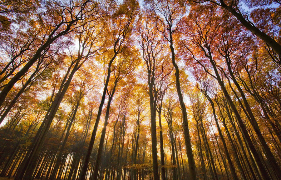 Beautiful Autumn by Carsten Meyerdierks on 500px.com