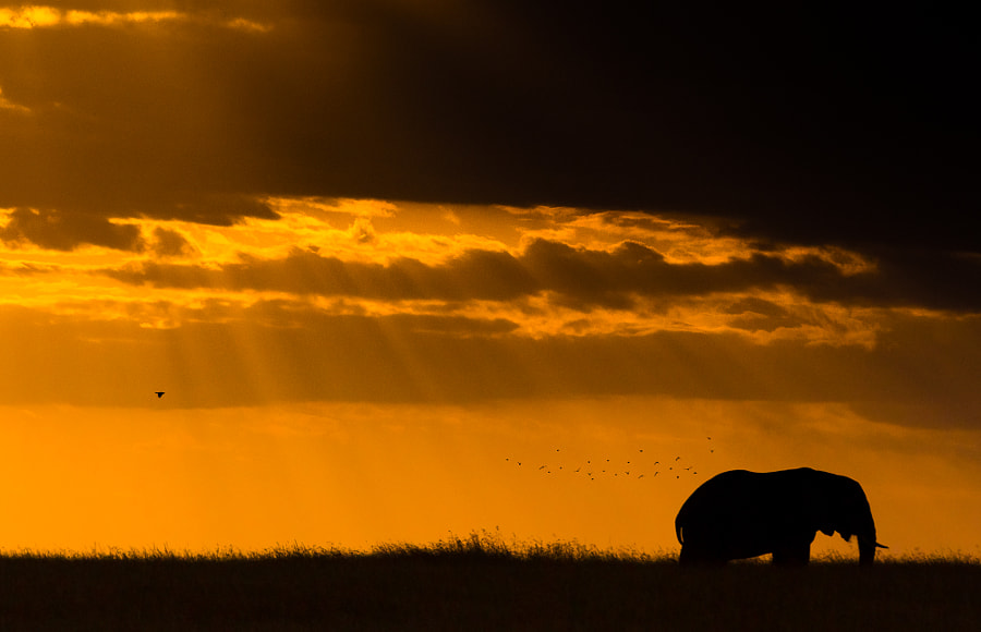 Elephant Birds and Sunset by Libor Plo?ek on 500px.com