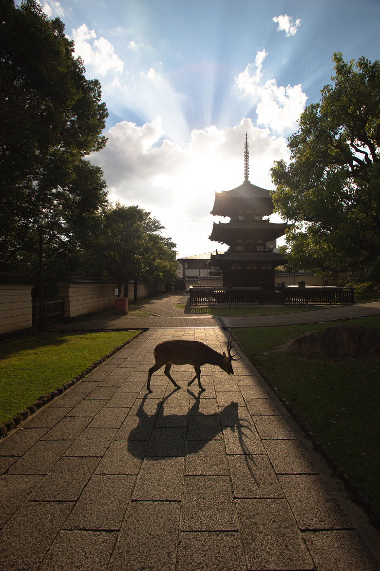 Photograph The Divine Deer of Nara by Luis LJN on 500px