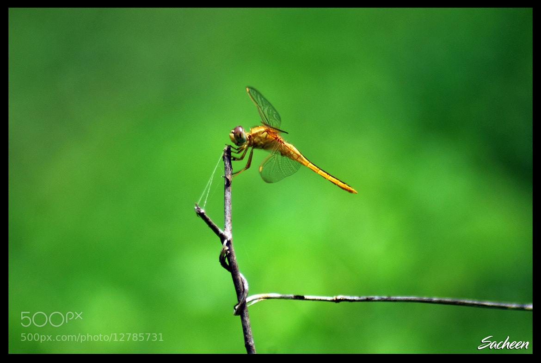 Photograph chatur by Sacheen Vaidya on 500px
