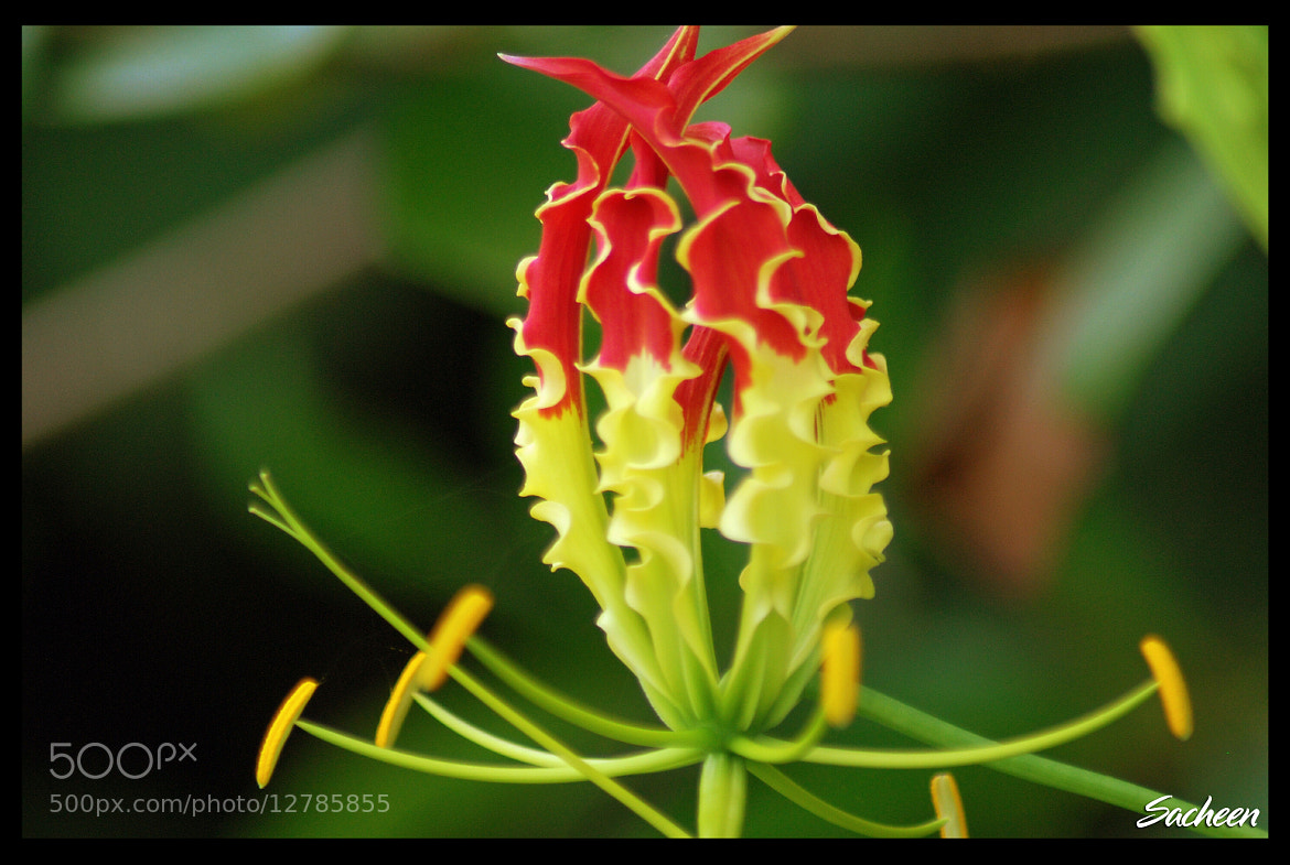 Photograph forest flower by Sacheen Vaidya on 500px