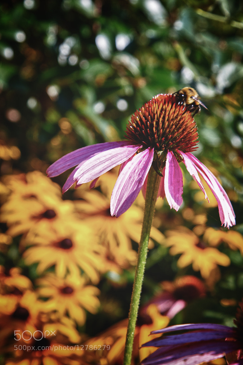 Photograph Bee-ing there by Mark Hughes on 500px