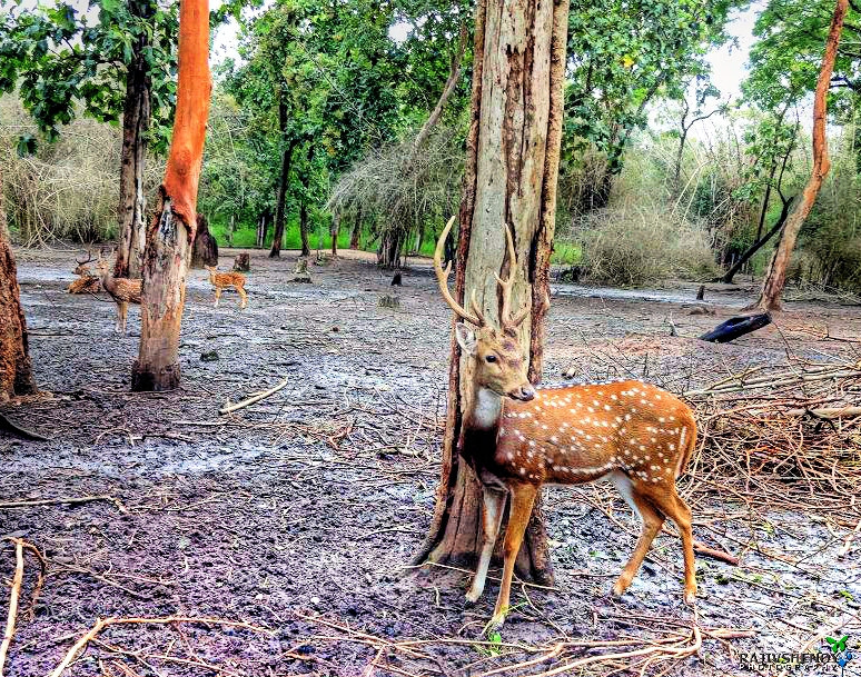 Photograph Deer by Rajiv Shenoy on 500px