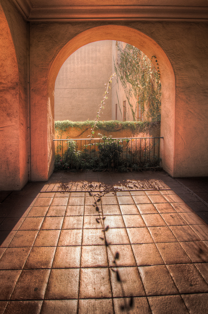 Photograph The Vine & The Arch by  Photo on 500px