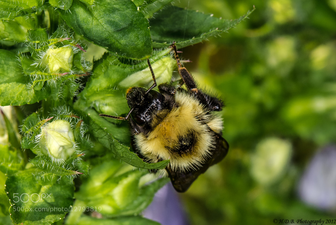 Photograph Pollen Hunter by Harold Begun on 500px