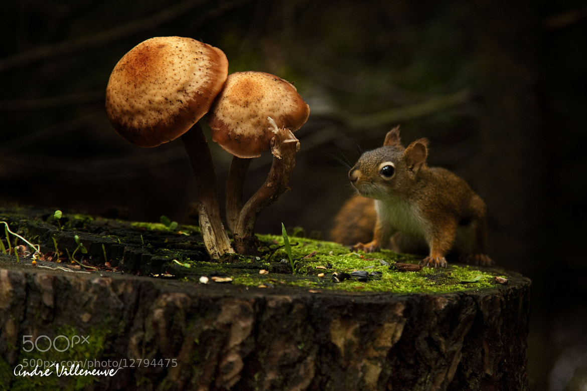 Photograph Three mushrooms by Andre Villeneuve on 500px