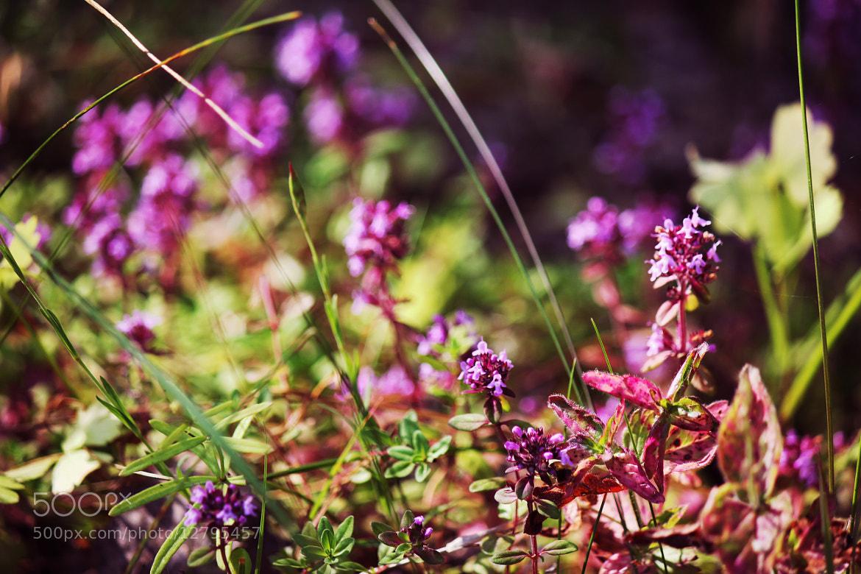 Photograph violet by Angelina Korovnikova on 500px