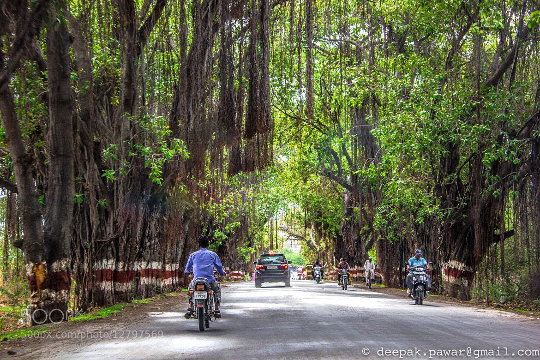 Photograph Driving through the woods by Deepak Pawar on 500px