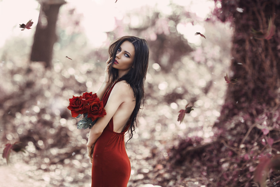 Red Rose by Alessandro Di Cicco on 500px.com
