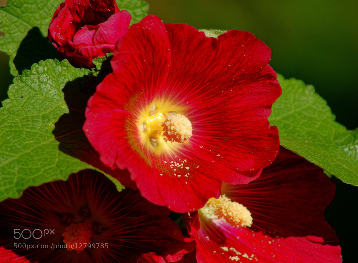 Photograph Red yellow green  by Grigory Nesvetaev on 500px