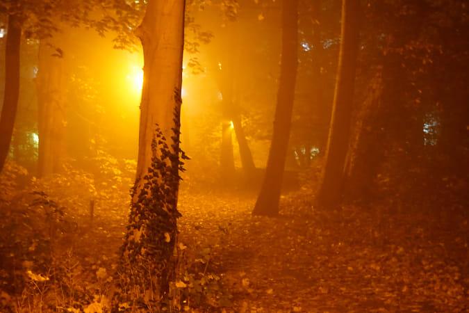 The Mist Labyrinth